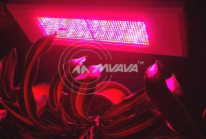 600W LED Grow Light Panel